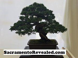 Photo of Bonsai