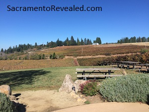 Photo of Lava Cap Winery View