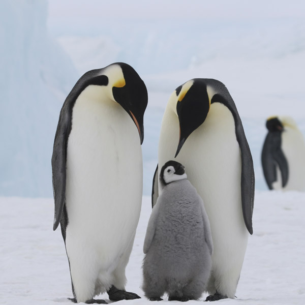 Penguins Know Their Partners