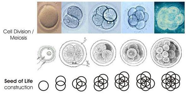 Image result for images flower of life geometry vesica pisces