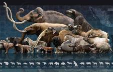 Pleistocene megafauna (RIP)