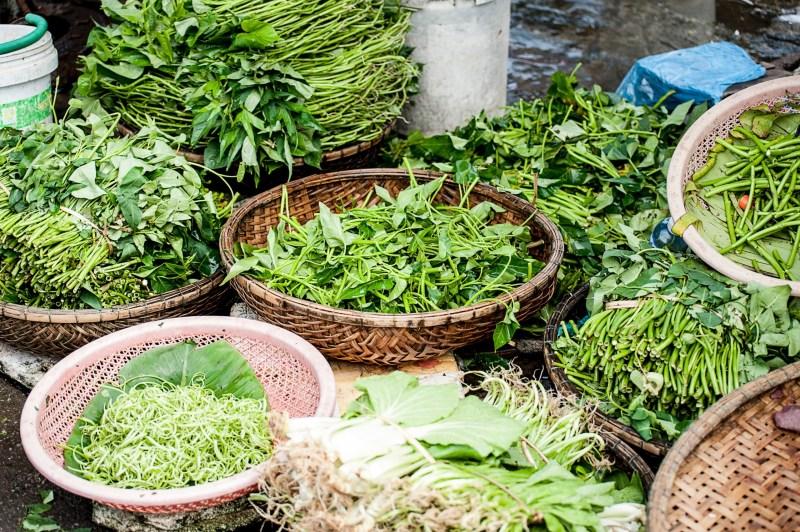 herbalism certification