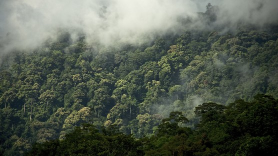 Norway Conserving Tropical Rainforests