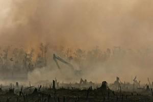 Indonesia deforestation