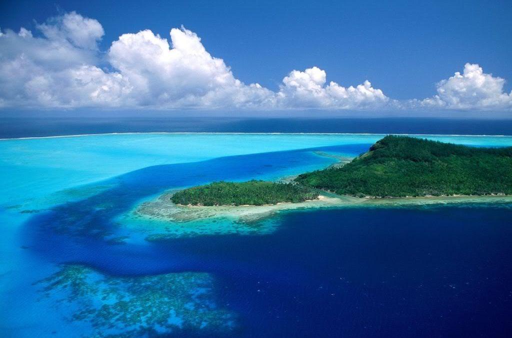 Fiji reforestation