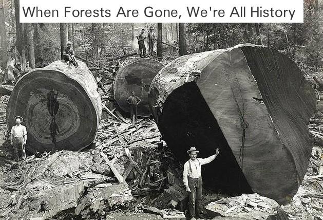 deforestation and forest conservation