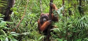 deforestation and biodiversity