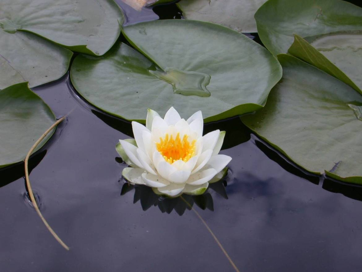 Lotus in the Mud: Blackness, Decolonizing Yoga and Tai Chi and My Teaching Practice