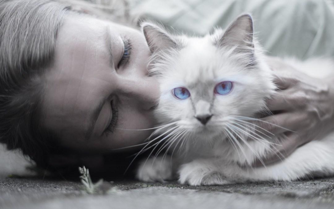 Anemia nel Gatto, sintomi e terapia