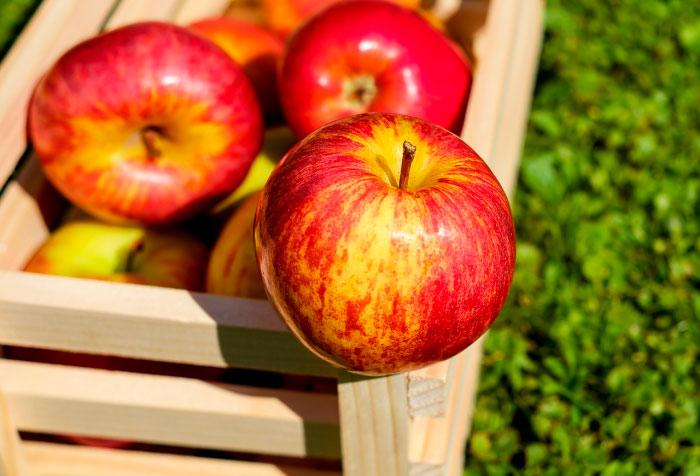 Выдерживают ли яблоки заморозки