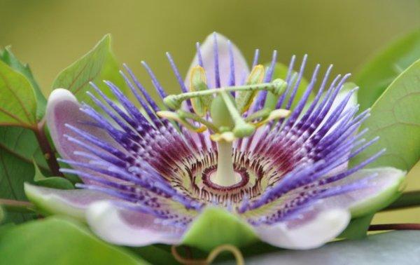 Фото красота растений. Самые красивые растения мира ...