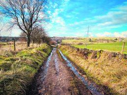 3985 Wood Brook Lane Gemma Pix (1)