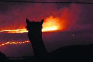 Alpaca Fire pic by Jospeh Brigstock