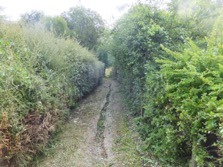 Hedge cut back either side