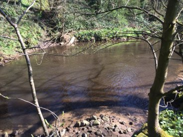 River Tame Pollution pic