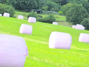 p9 pink hay bales