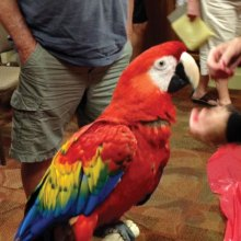 Sedona is a five year old Scarlet Macaw.