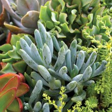 Growing succulents in a container