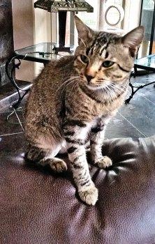 Boomer the Villa cat