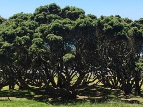 Tauranga- Mt.Maunganui