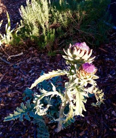Flowers at Ranchos Dos Amantes
