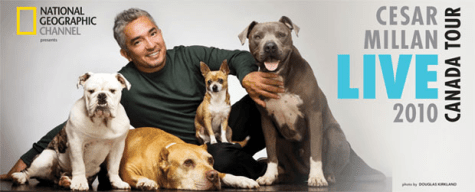 A photo of Cesar Millan with his dogs