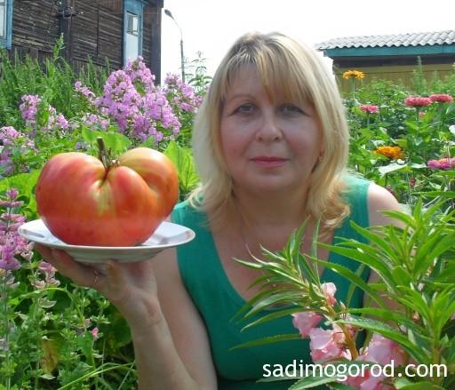 помидоры розовый мед