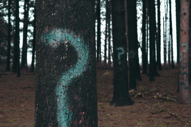 Trees with question marks.jpg