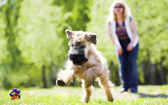 Bagaimana bermain dengan anjing
