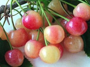 Вредители огорода: слизни, медведка, пластинчатые жуки и улитки - Сады Беларуси