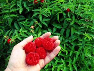 Семинар «Технологии выращивания ягодных культур»
