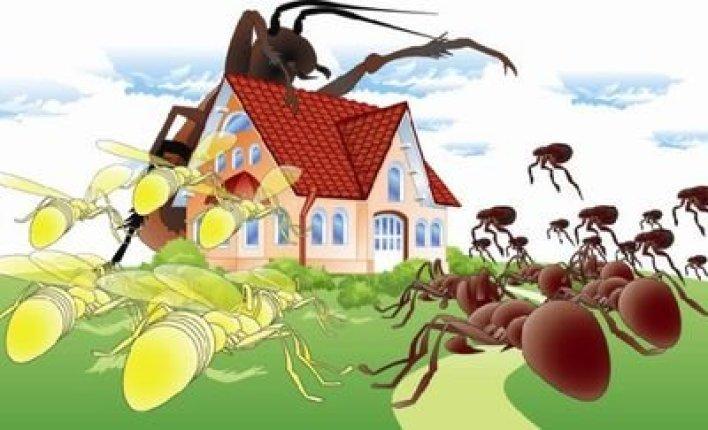 شركة-مكافحة-حشرات-بالدمام