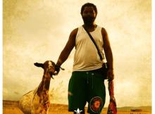 Sjava Imigomo Nemibandelo Mp3 Download Safakaza
