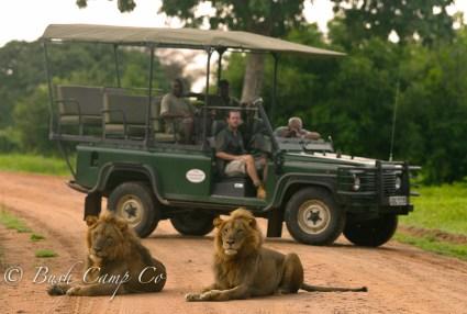 Zambia game drive