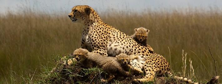 Safaris en Navidad