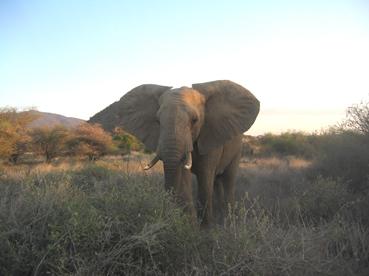 Elefante. Parque Nacional de Shaba. Kenya. Septiembre de 2005
