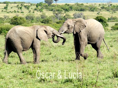 elefantes_mara