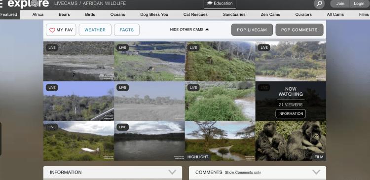 übersicht Webcams Online Safari