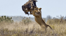 Kenya World's Top Safari Destination