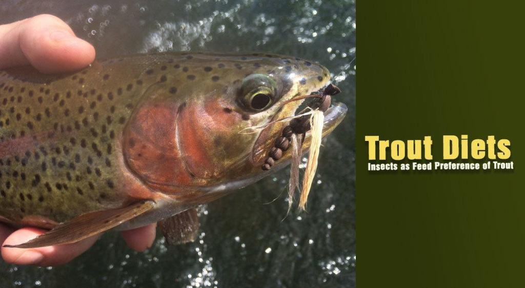 All About Trout Diets: Insects as Feed Preference