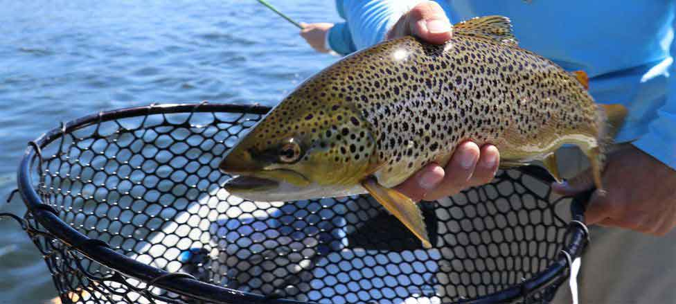 Essential Tips on Trout Fishing for Beginners