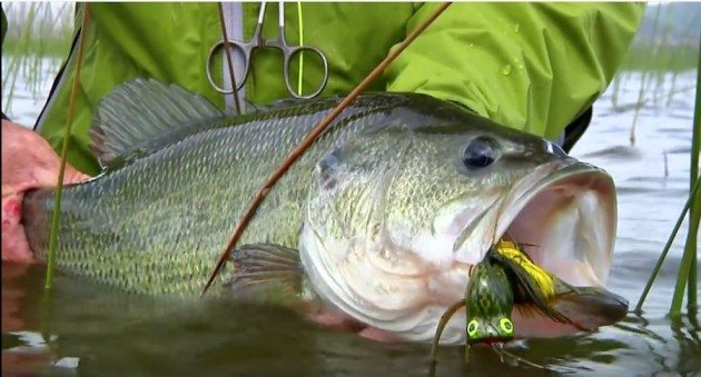 Fish Topwater for Bass