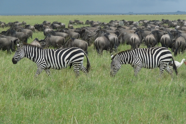 8 Day Safari Serengeti Migrations
