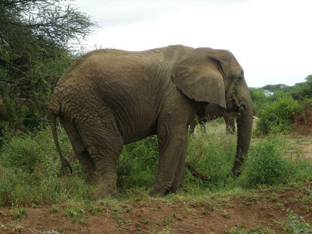 Safari to Manyara Ngorongoro