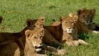 Tanzania Safari Lodge Serengeti