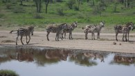 Tanzania-4 Days Camping Safari Tarangire, Serengeti, Ngorongoro