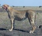 Tanzania Safari-Lodge-Accommodations 7 Days