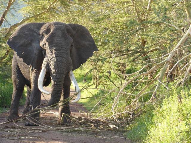 Tanzania Adventures Safaris