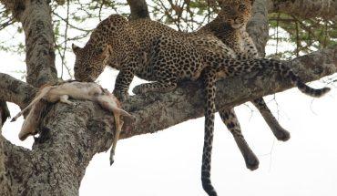 Tanzania affordable safari
