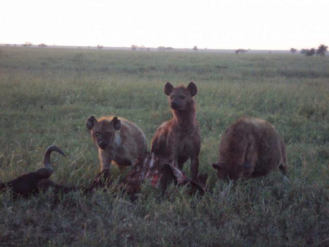 7 days camping safari to serengeti ngorongoro Tarangire Lake natron